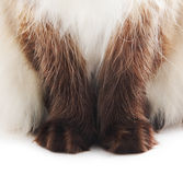 Cat paws. Isolated on white stock photos