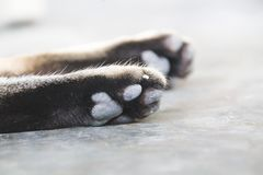Cat is paws. stock images