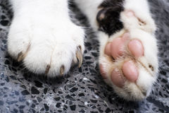 Cat paws. With close up view stock photos