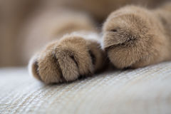 Cat paws closeup macro shot. Lying cat paws closeup macro shot Stock Photo