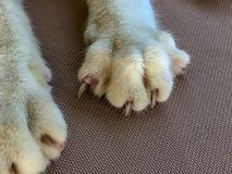 Cat paws with extended claws stock image