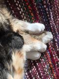 Cat Paws Intertwined Resting Together foto de stock
