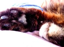 Cat paws Royalty Free Stock Photos