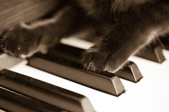 Cat paws on piano. Pussycat stock photos