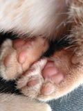 Cat Paws stock photos
