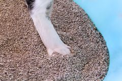 Cat paws in the sand, closeup. Cat using toilet, cat in litter box, for pooping or urinate, pooping in clean sand toilet. stock image