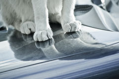 Cat paws Royalty Free Stock Photography