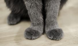 Cat paws sitting on wooden table Stock Photos