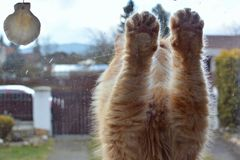 Cat paws at the window Stock Photos