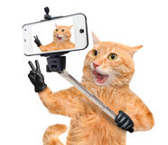 Cat with peace fingers in black leather taking a selfie together with a smartphone. Royalty Free Stock Image