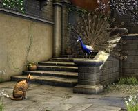 Cat and Peacock on a Mediterranean Street Royalty Free Stock Images
