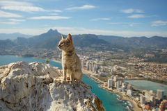 Cat at the peak of the mountain Stock Images