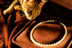 Cat and pearl necklace Stock Image