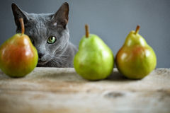 Cat and Pears Stock Photo