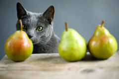 Cat and Pears Royalty Free Stock Photography