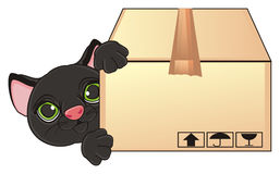 Cat peek up from box. Black car stick out from box Stock Photos