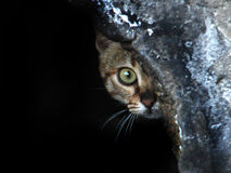 Cat peeking. A cat feeling in some danger hiding herself and peeking somewhere Royalty Free Stock Images