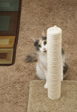 Cat Peeking around scratching post Stock Photography