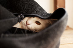 Cat peeking Stock Image