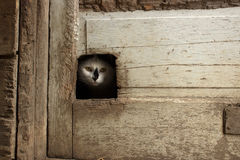 Cat Peeking Through Door Fotos de Stock Royalty Free