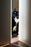 Cat peeking through the door Royalty Free Stock Photography
