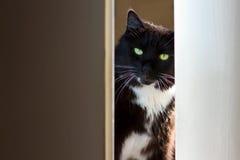 Cat peeking through the door. Black and white cat peeking through the door Stock Photo