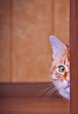 Cat peeking out from behind a corner Stock Photography