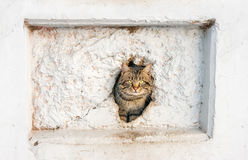 Cat peeking out of a hole in the wall. Outdoor closeup stock image