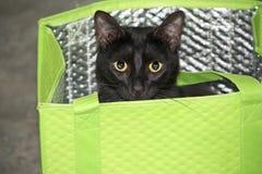 Cat Peeking Out negra de un bolso de compras del verde lima fotografía de archivo