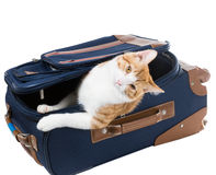 Cat peeking out of a suitcase Stock Photography