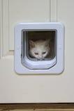 Cat Peeking Through Pet Door blanche photographie stock