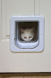 Cat Peeking Through Pet Door branca fotografia de stock