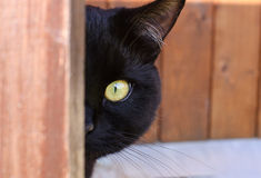 Cat peeping from behind a corner. Village house, yellow eye Stock Photos