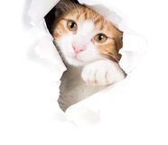 Cat peeping through the hole in the paper Royalty Free Stock Images