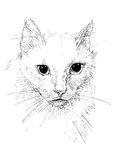 Cat pen ink. White cat drawn pen and ink and transferred to the vector vector illustration