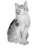Cat pencil drawing children's Stock Photo