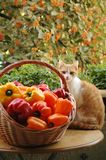 Cat and peppers royalty free stock photography
