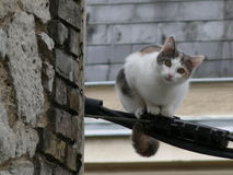 Cat perched on an electric wire. A cheeky look from a perched cat Stock Photo
