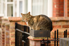 Cat perched on gate post Stock Photo