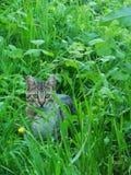 Cat& x27; percorso di s immagini stock