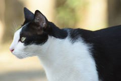 Cat. A cat is the perfect best friend Royalty Free Stock Photos