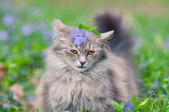Cat on the periwinkle lawn Stock Image