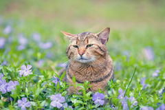 Cat on the periwinkle lawn Royalty Free Stock Photo