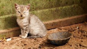 Cat in Peru. Small unhealthy cat in Peru royalty free stock image
