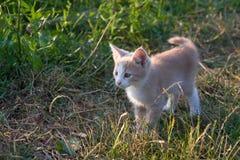 Free Cat Pet Stock Photos - 10357003