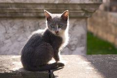 Cat pet Royalty Free Stock Photo