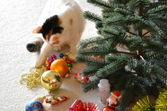 Cat Pet And Christmas Decor Stock Image