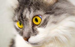 Cat. Pet animal cat Stock Image