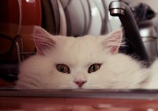 Cat. Pet-best friend. White cat is a washer Royalty Free Stock Photos
