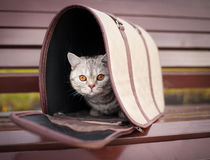 Cat in pet carrier. On a park bench Royalty Free Stock Photos